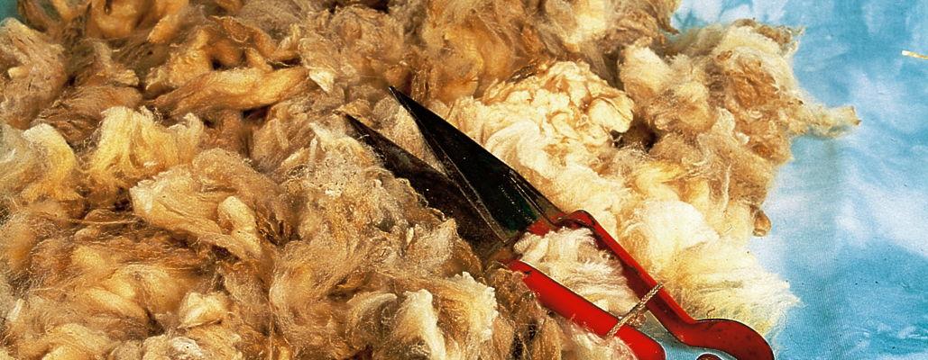Ein Haufen gescherter Wolle